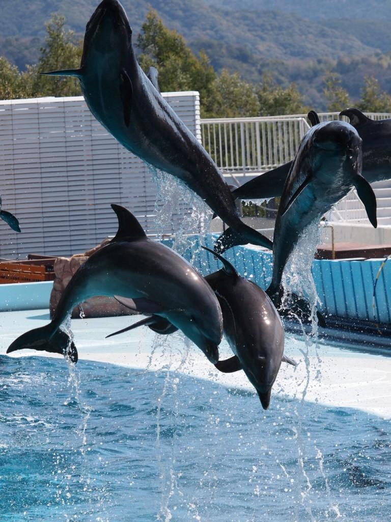 南紀白浜ワールドサファリ-イルカ2-2011-3-18