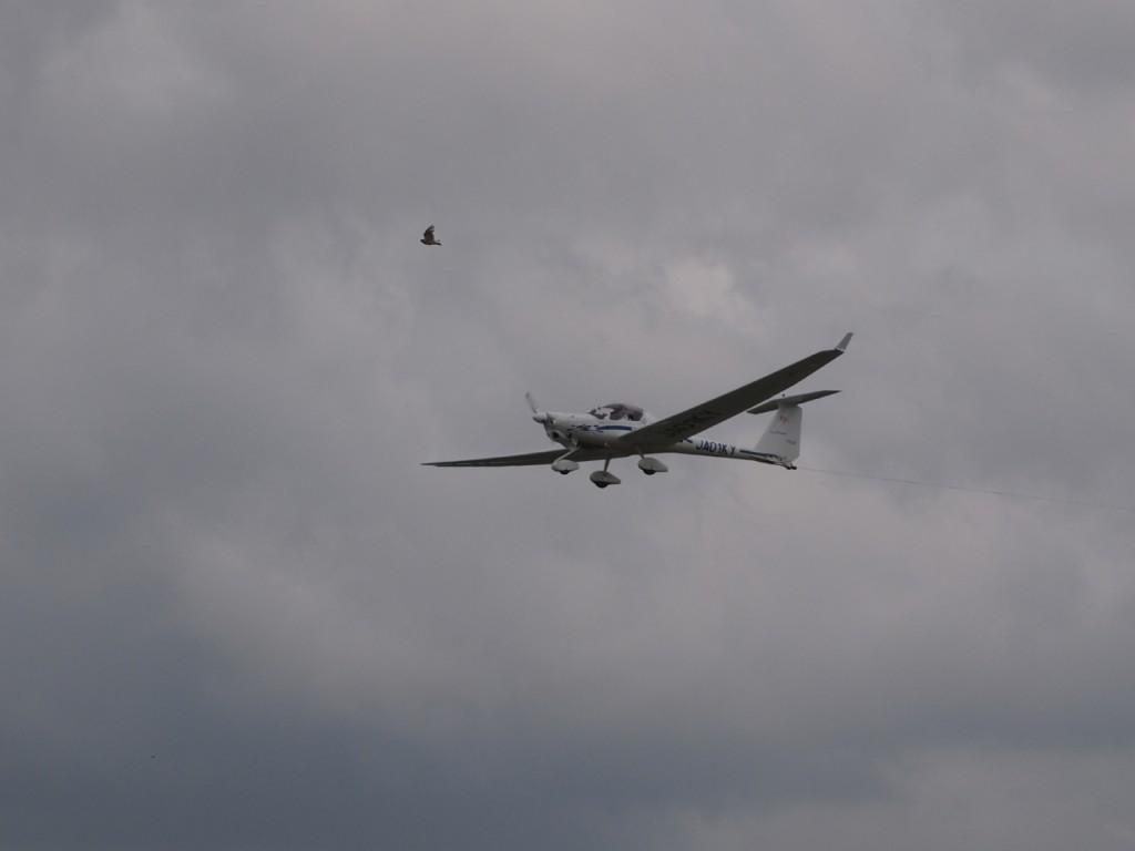 glider-hibari2